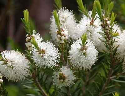 Blog-aroma-shiatsu-eft-lionel-rigour1.